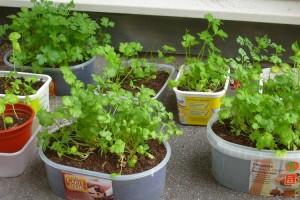 cc-salat-kraeutermischung-auf-vorrat-selber-machen-1