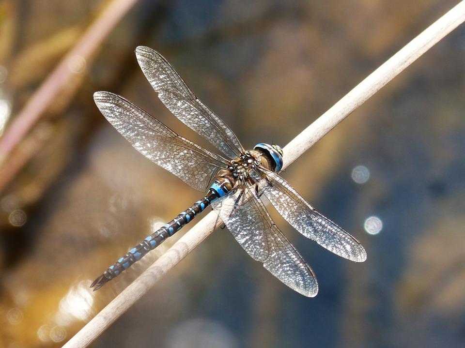 Krafttier Libelle: kartenlegen-beratung.com