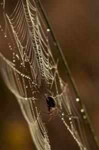 Krafttier Spinne: kartenlegen-beratung.com