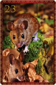 Die Mäuse: katenlegen-beratung.com